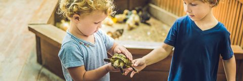 Toddlers boy and girl caresses and playing with turtle in the petting zoo. concept of sustainability, love of nature. Respect for the world and love for stock image