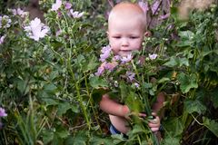 Toddlers climbed into the thicket of flowers in the summer noon. Concept of children among flowers.  Royalty Free Stock Photo