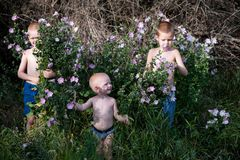 Toddlers climbed into the thicket of flowers in the summer noon. Concept of children among flowers.  Stock Photos