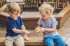 Toddlers girl and boy playing with the ducklings in the petting. Zoo royalty free stock photos