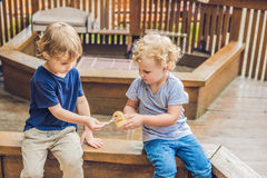 Toddlers girl and boy playing with the ducklings in the petting. Zoo stock image