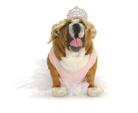 Toddlers in tiaras Stock Images