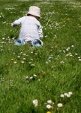 Toddling baby. Infant toddling on the green grass and daisys Stock Images