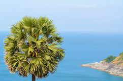 Toddy palm and sea. Stock Images