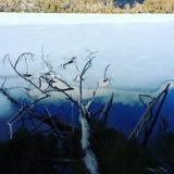 Todesbaum in gefrorenem See Stockfoto