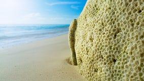 Todeskoralle auf dem sonnigen sandigen Strand stockfotos