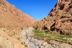 Todgha Gorge in Morocco Royalty Free Stock Photography