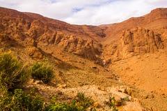 Todgha wąwóz jest jarem w atlant górach, blisko Tinghir, Maroko zdjęcie royalty free