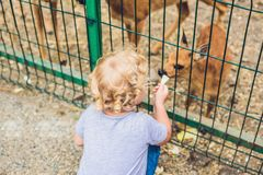 Todler girl feeds a small deer in the zoo Royalty Free Stock Photography