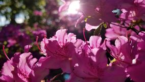 Todo color de rosa Fotos de archivo
