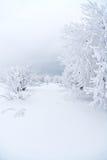 Todo el blanco bajo nieve Fotografía de archivo libre de regalías