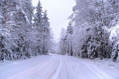 Todo el blanco bajo nieve Bosque de la nieve en Suecia Fotos de archivo libres de regalías