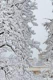 Todo el blanco debajo de la nieve, paisaje del invierno en los árboles cubiertos con nevadas fuertes Fotografía de archivo libre de regalías