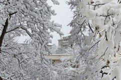 Todo el blanco debajo de la nieve, paisaje del invierno en los árboles cubiertos con nevadas fuertes Imágenes de archivo libres de regalías
