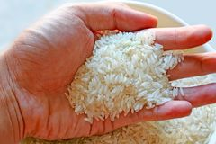 Todo o arroz Imagens de Stock