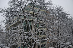 Todo o branco sob a neve, paisagem do inverno nas árvores cobertas com as nevadas fortes Fotos de Stock