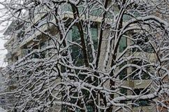 Todo o branco sob a neve, paisagem do inverno nas árvores cobertas com as nevadas fortes Foto de Stock