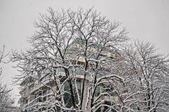 Todo o branco sob a neve, paisagem do inverno nas árvores cobertas com as nevadas fortes Imagens de Stock