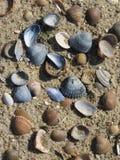 Todo o tipo dos escudos na praia fotografia de stock