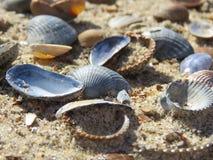 Todo o tipo dos escudos na praia fotografia de stock royalty free