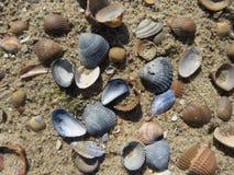 Todo o tipo dos escudos na praia fotos de stock royalty free