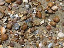 Todo o tipo dos escudos na praia imagens de stock royalty free