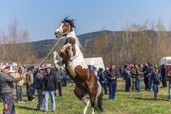 Todorovden i den Kalugerovo byn, Bulgarien Fotografering för Bildbyråer