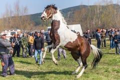 Todorovden i den Kalugerovo byn, Bulgarien Arkivfoton