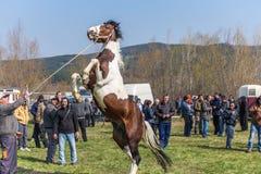Todorovden in Kalugerovo-dorp, Bulgarije Royalty-vrije Stock Fotografie