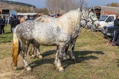 Todorovden in Kalugerovo-dorp, Bulgarije Royalty-vrije Stock Foto's