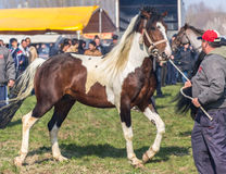 Todorovden in Kalugerovo-dorp, Bulgarije Stock Foto