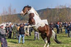 Todorovden nel villaggio di Kalugerovo, Bulgaria Fotografia Stock