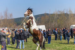 Todorovden nel villaggio di Kalugerovo, Bulgaria Immagine Stock