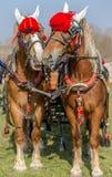 Todorovden nel villaggio di Kalugerovo, Bulgaria Fotografie Stock