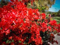 Todos ama las flores Imagenes de archivo