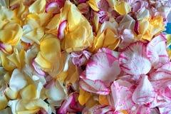 Todos aumentaram as p?talas, hastes, flores cor-de-rosa em um fundo branco Para um fundo bonito foto de stock