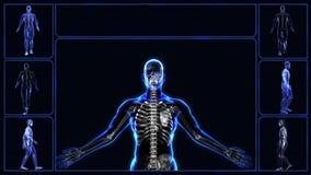 Todos los sistemas del cuerpo humano ilustración del vector