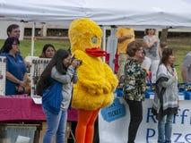 Todos os participantes saudam a bandeira americana em Duck Festival de borracha fotos de stock royalty free