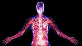 Todos os sistemas do corpo humano ilustração royalty free