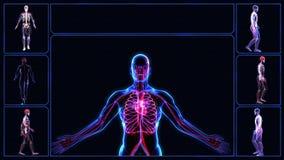 Todos os sistemas do corpo humano filme