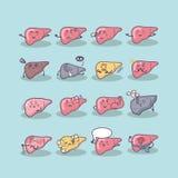 Todos os tipos do fígado ilustração do vetor