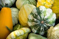 Todos os tipos dos gourds imagens de stock royalty free