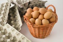 Todos sus huevos en una cesta Fotos de archivo libres de regalías