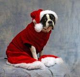 Todos vestidos para arriba para la Navidad Foto de archivo