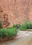 todra του Μαρόκου φαραγγιών Στοκ Εικόνα