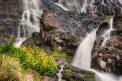 Todtnauer vattenfall med gula blommor, svart skog, Tyskland Arkivbilder