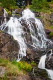 Todtnauer Waterfalls with yellow flowers, Black Forest, Germany Royalty Free Stock Image