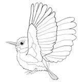 Tody Bird di coloritura cubano esotico Illustrazione di vettore Immagini Stock Libere da Diritti