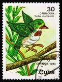 Tody cubano (Todus multicolorido), serie protegido dos animais, cerca de 1984 ilustração stock