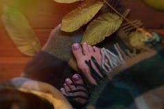 Toe το φθινόπωρο φύλλων Ηλιόλουστο πρωί φθινοπώρου, τα toe, που τυλίγονται Στοκ φωτογραφία με δικαίωμα ελεύθερης χρήσης